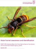 Asian hornet awareness and identification
